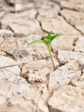 Seedling desert Stock Images