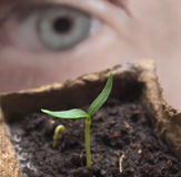 Seedling with eye. Eye person`s view of a growing plant royalty free stock photos