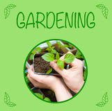Seedling in female hands, gardening background Stock Image