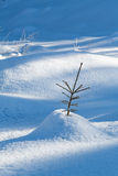 Seedling fir tree with interesting shadows. Seedling fir tree in the snow in the forest North of Oslo royalty free stock photos