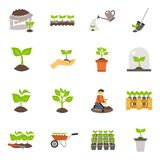 Seedling Flat Icons Set Royalty Free Stock Image