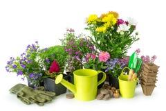 Seedling of garden plants and flowers. Garden equipment on white. Seedling of garden plants and flowers. Garden equipment: watering can, bucket, pots, shovel royalty free stock image