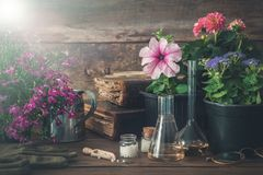 Seedling of garden plants and flowers, old books and homeopathic remedies for plants. Natural alternative treatment of plant diseases Stock Photos