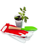 Seedling, garden shovel and gloves Stock Images