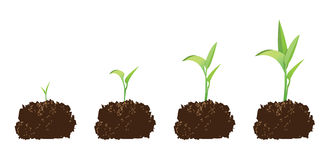 Seedling or germination royalty free illustration