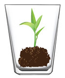 Seedling in glass Royalty Free Stock Image