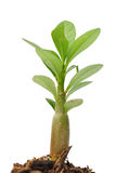 Seedling green plant Stock Photos