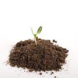 Seedling green plant Stock Image
