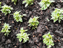 Seedling green plant surface Stock Photo