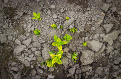 Seedling green plant surface top view Stock Images