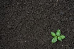 Seedling green plant surface top view textured background. Space for text royalty free stock photography