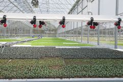 Seedling greenhouse watering system with diffusers. Greenhouse watering system . Seedling greenhouse with diffusers. Agricultural view for your agribusiness royalty free stock photos
