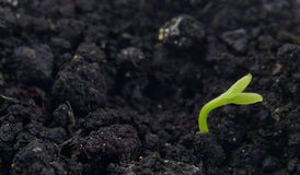 Seedling in ground Royalty Free Stock Images
