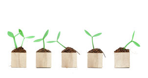 Seedling grow from wooden block Royalty Free Stock Photography