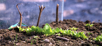 Seedling growing Royalty Free Stock Images