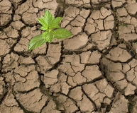 Seedling growing from barren land Stock Photos