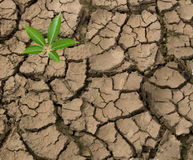 Seedling growing from barren land. Close up of seedling growing from barren land Stock Image