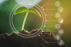 Seedling growing from fertile soil with icons about environment on image. Concept of environmental conservation and protection of our world sustainable royalty free stock photos