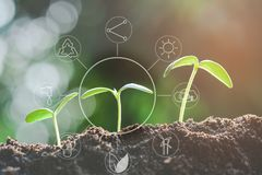 Seedling growing from fertile soil with icons about environment on image. Concept of environmental conservation and protection of our world sustainable stock images