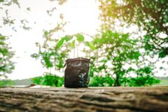 Seedling growing from fertile soil. Concept of environmental conservation and protection of our world sustainable royalty free stock image
