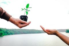 Seedling growing from fertile soil was gently encircled with hands. Concept of environmental conservation and protection of our world sustainable stock photography