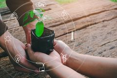 Seedling growing from fertile soil was gently encircled with hands. Concept of environmental conservation and protection of our world sustainable royalty free stock images