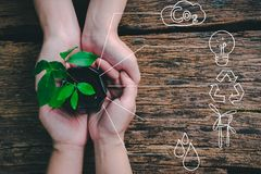 Seedling growing from fertile soil was gently encircled with hands. Concept of environmental conservation and protection of our world sustainable stock image