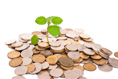 Seedling growing in money Royalty Free Stock Photography