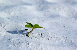 Seedling growing in sand Royalty Free Stock Photos