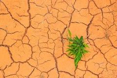 Seedling growing trough dry soil cracks Royalty Free Stock Image