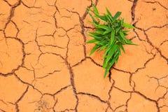 Seedling growing trough dry soil cracks Royalty Free Stock Photo