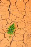 Seedling growing trough dry soil cracks Royalty Free Stock Images