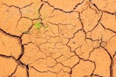 Seedling growing trough dry soil cracks Royalty Free Stock Images