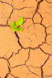 Seedling growing trough dry soil cracks Stock Image