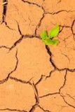 Seedling growing trough dry soil cracks Stock Photography