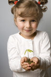 Seedling growth from coins. On hands Royalty Free Stock Photography