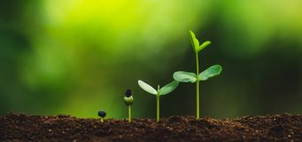 Seedling growth Planting trees Watering a tree Natural light. Green stock images