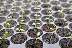 Seedling growth Royalty Free Stock Photos