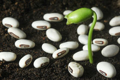 Seedling growth - Series 2 Stock Photography