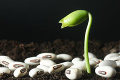 Seedling growth - Series 3 Stock Images