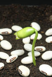 Seedling growth Stock Photo