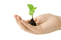 Seedling in hand Royalty Free Stock Photos