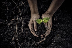 Seedling on hand. Dark color tone. Selective focus on Little seedling in black soil on child hand. Earth day concept Royalty Free Stock Photo