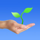 Seedling in hand. Isolated on blue backgrond royalty free stock images