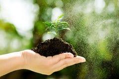 Seedling on hand Stock Photo