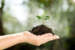 Seedling on hand Stock Image