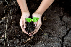 Seedling on hand. Selective focus on Little seedling in black soil on child hand. Earth day concept Royalty Free Stock Photos