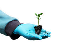 Seedling in hand Royalty Free Stock Images