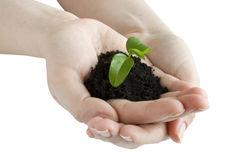 Seedling in the hands Stock Photography