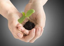 Seedling in the hands Royalty Free Stock Images